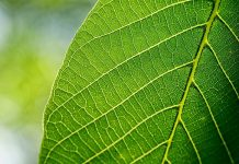 artificial leaves, artificial photosynthesis